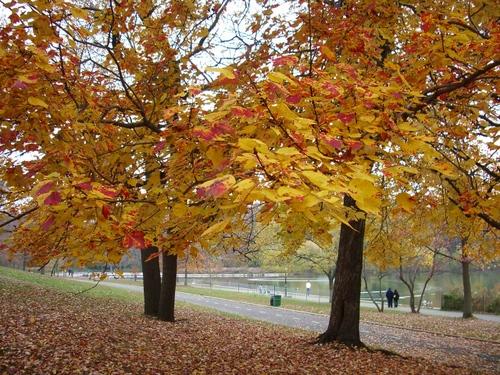 Kissena Parkで紅葉狩り_c0064534_1193291.jpg