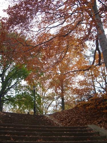 Kissena Parkで紅葉狩り_c0064534_1205541.jpg