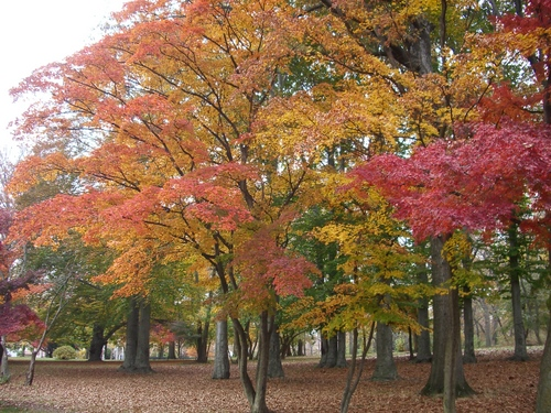 Kissena Parkで紅葉狩り_c0064534_1213067.jpg