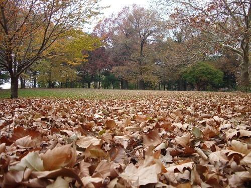 Kissena Parkで紅葉狩り_c0064534_122468.jpg