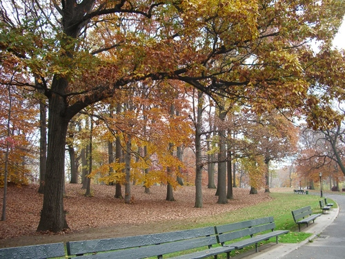 Kissena Parkで紅葉狩り_c0064534_12444.jpg
