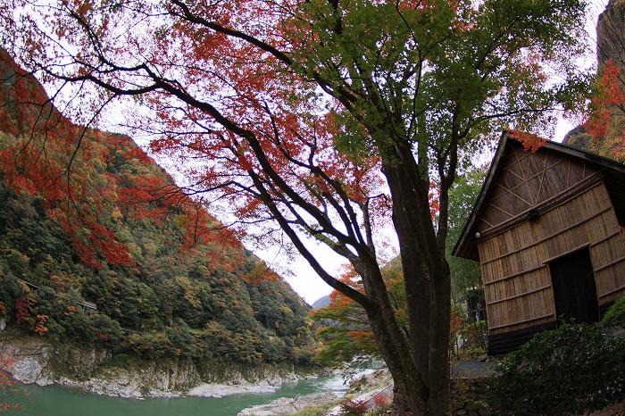 秋色こそ日本色・・・_a0122544_19482861.jpg