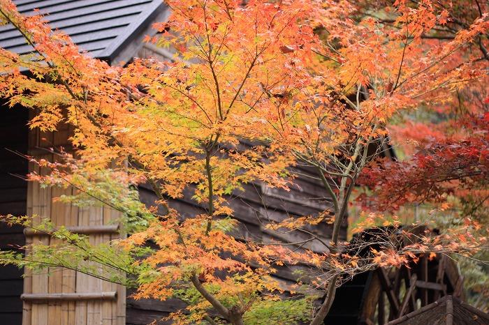 秋色こそ日本色・・・_a0122544_19484992.jpg