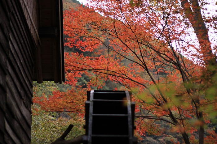 秋色こそ日本色・・・_a0122544_19485976.jpg