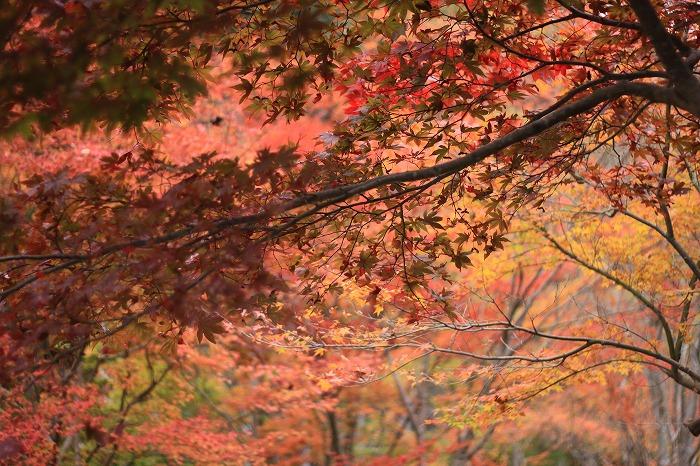 秋色こそ日本色・・・_a0122544_19491343.jpg