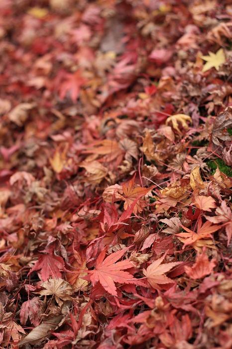 秋色こそ日本色・・・_a0122544_1949204.jpg