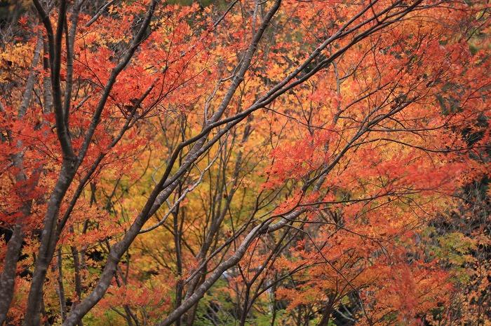 秋色こそ日本色・・・_a0122544_1949532.jpg