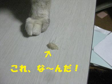 b0151748_12175697.jpg