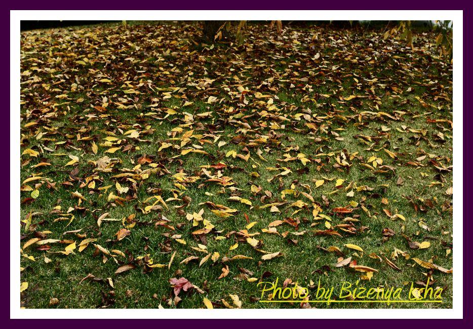 『秋らしく』_d0086248_6482082.jpg