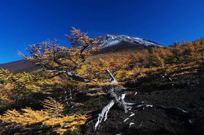 2009 富士山の秋(3)~富士スバルラインの紅葉 その2(御庭にて)_f0155048_1042264.jpg