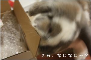 f0196660_0265527.jpg