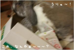 f0196660_02888.jpg