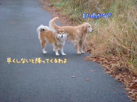f0064906_1692818.jpg