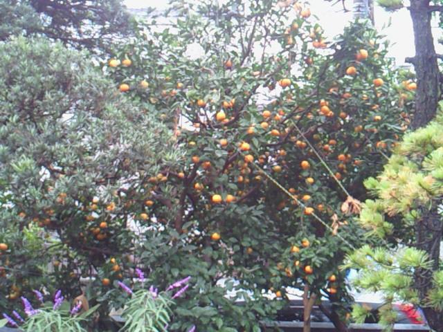 収穫_f0169509_18343678.jpg