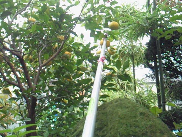 収穫_f0169509_1843214.jpg