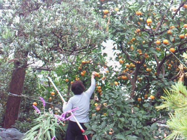収穫_f0169509_18452670.jpg