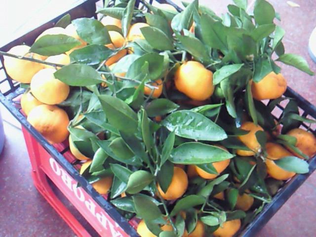 収穫_f0169509_18455464.jpg