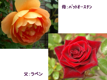 c0025140_11205114.jpg