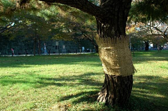 和歌山城公園にて_b0093754_003942.jpg