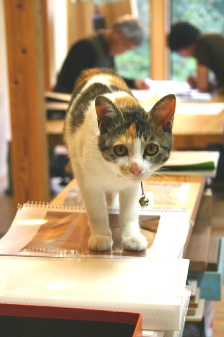 グーグー(猫)_f0171785_16542831.jpg