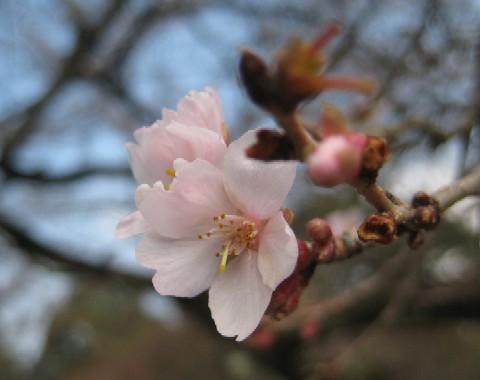 彦根城を歩く_c0013687_11324444.jpg