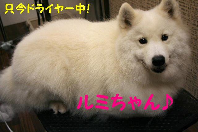 b0130018_1693519.jpg