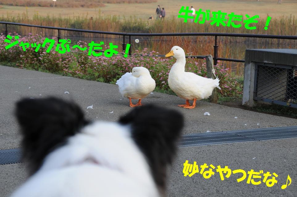 c0147241_22314252.jpg