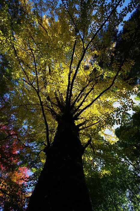 2009紅葉 Ⅴ 金蔵寺_f0152550_17443530.jpg