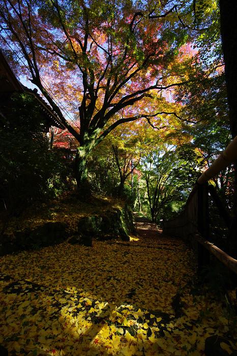 2009紅葉 Ⅴ 金蔵寺_f0152550_17445237.jpg