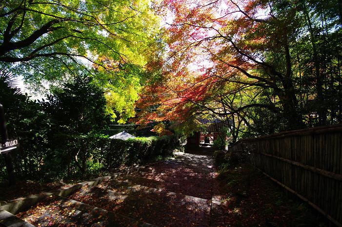 2009紅葉 Ⅴ 金蔵寺_f0152550_17445826.jpg