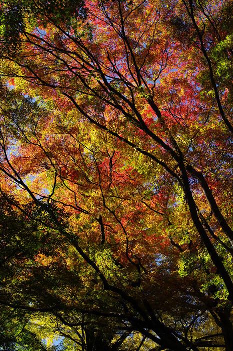 2009紅葉 Ⅴ 金蔵寺_f0152550_17451153.jpg
