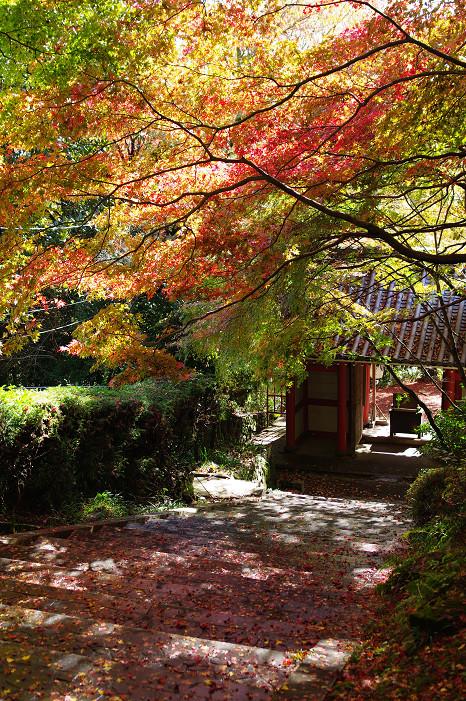 2009紅葉 Ⅴ 金蔵寺_f0152550_17452469.jpg