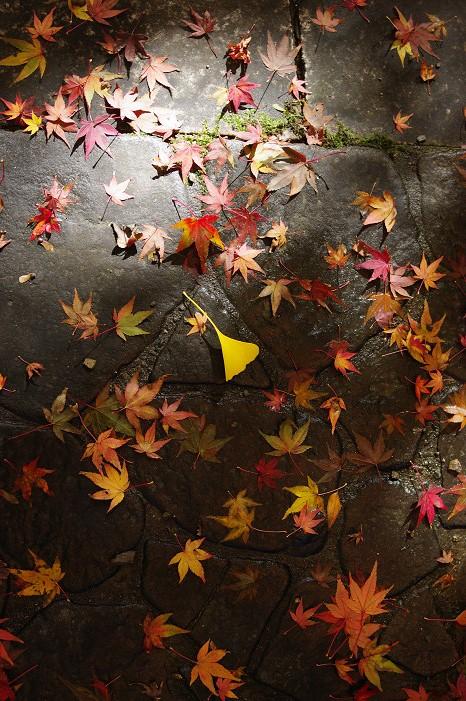 2009紅葉 Ⅴ 金蔵寺_f0152550_17453615.jpg