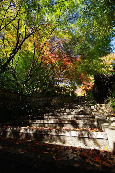 2009紅葉 Ⅴ 金蔵寺_f0152550_17454429.jpg
