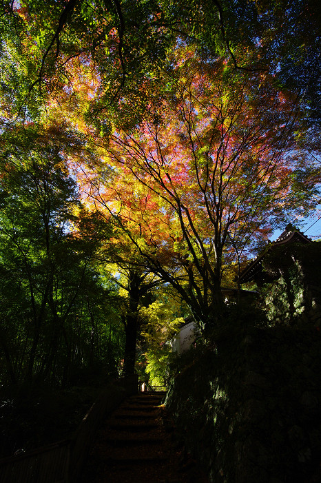2009紅葉 Ⅴ 金蔵寺_f0152550_1745471.jpg