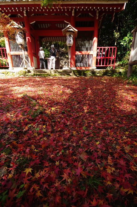 2009紅葉 Ⅴ 金蔵寺_f0152550_17455934.jpg