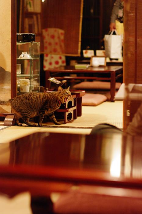 2009紅葉 Ⅴ 金蔵寺_f0152550_17481127.jpg