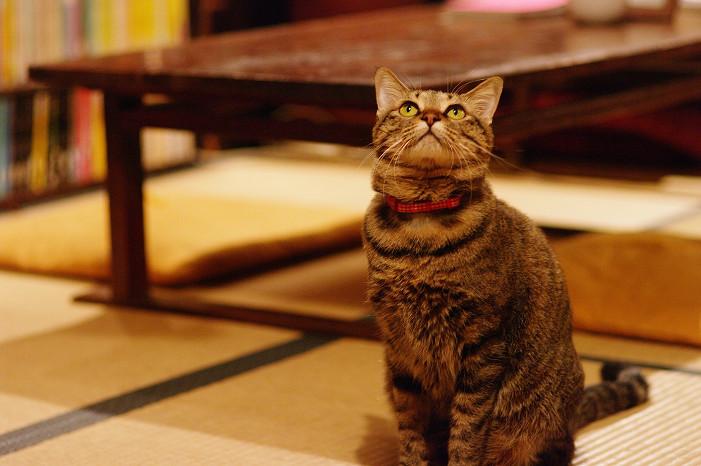 2009紅葉 Ⅴ 金蔵寺_f0152550_17481944.jpg