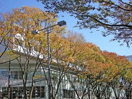 11月15日 秋の東京散歩 _a0001354_22593516.jpg