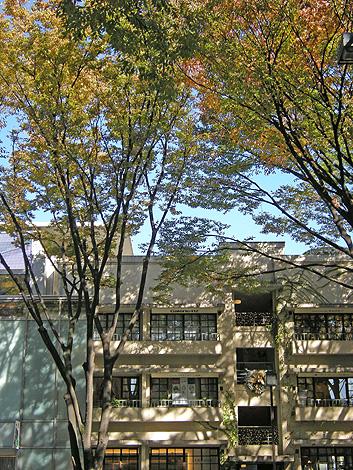 11月15日 秋の東京散歩 _a0001354_2259459.jpg