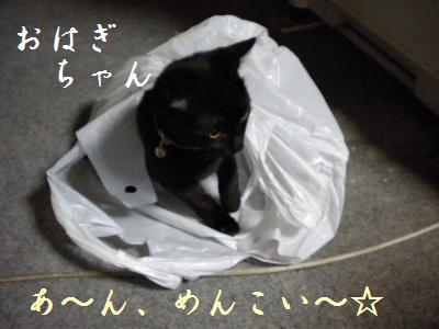b0112758_1741256.jpg