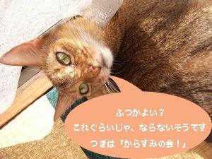 b0177078_1018542.jpg