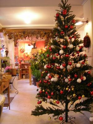 クリスマスツリー★_c0033678_16134070.jpg