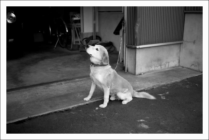 餡子の番犬_c0170584_9533081.jpg