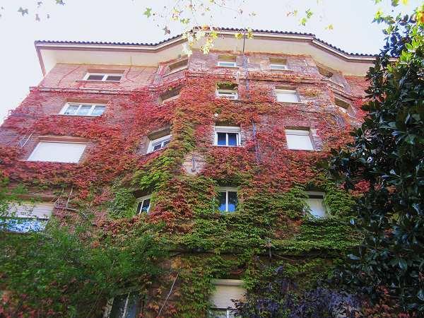 秋のアジサイ   Hortensia de otonyo_b0064411_4392264.jpg