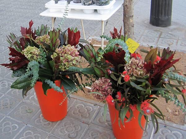 秋のアジサイ   Hortensia de otonyo_b0064411_444173.jpg