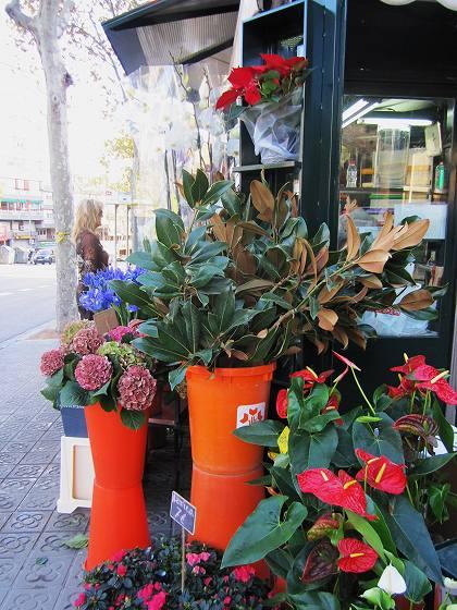 秋のアジサイ   Hortensia de otonyo_b0064411_4443879.jpg