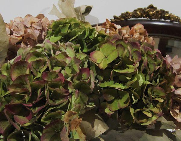 秋のアジサイ   Hortensia de otonyo_b0064411_5134665.jpg