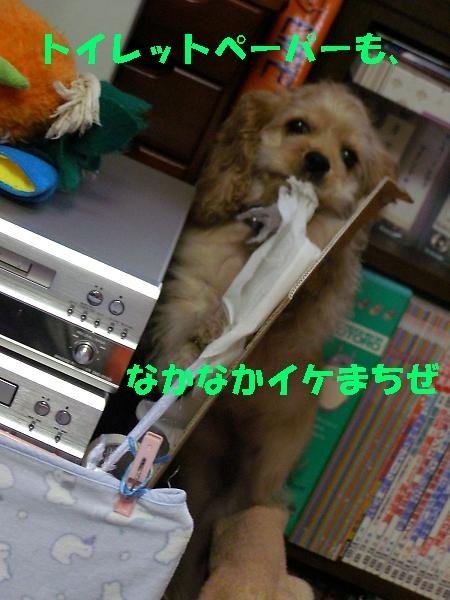 b0067012_2330663.jpg