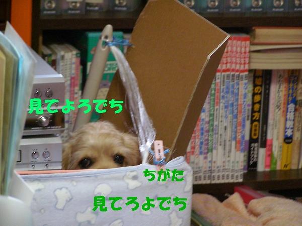 b0067012_23563673.jpg